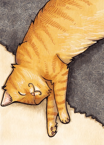 Kittenkat